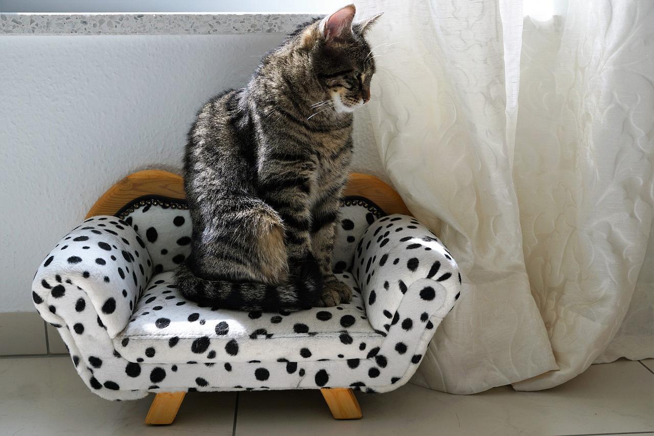 races de chats préférées en France