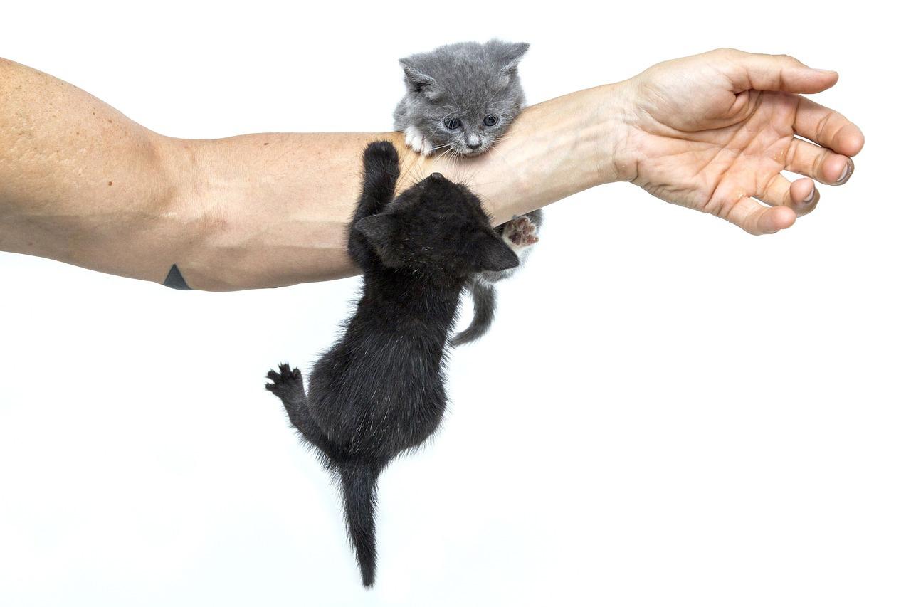éducation d'un chaton