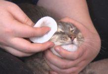 Soins et santé du chat