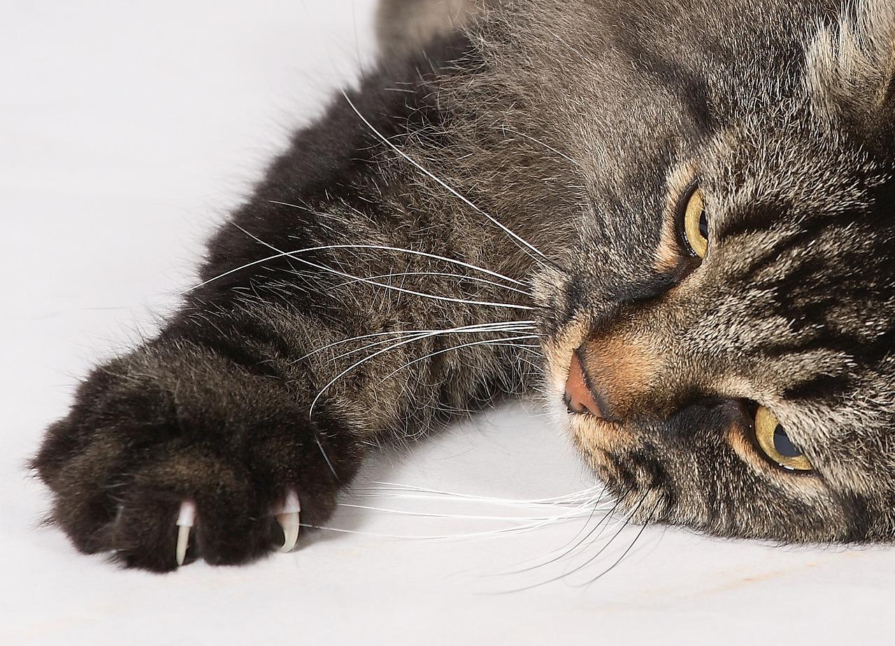 empêcher son chat de griffer