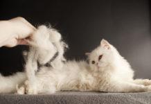 enlever les poils de chat