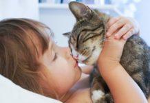 Races de chats à éviter avec un bébé