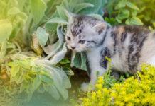 Plantes qui repoussent les chats