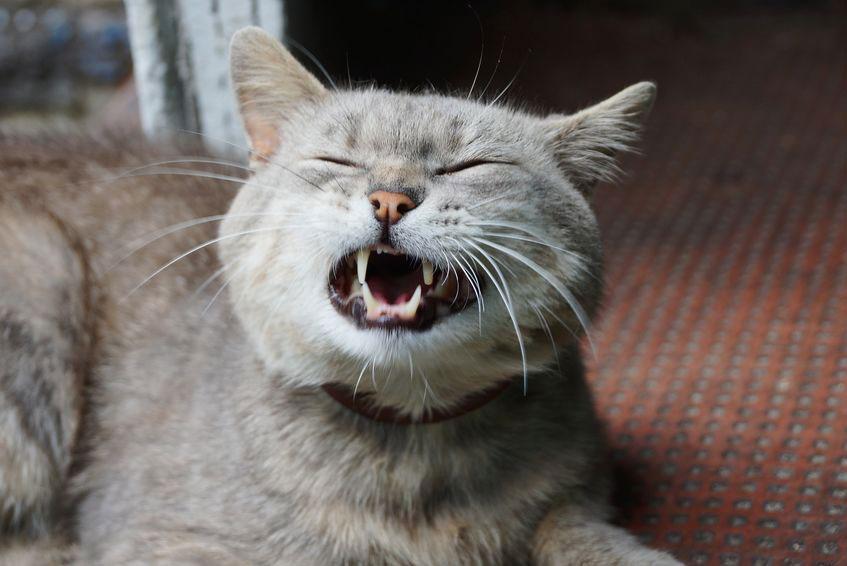 chat éternue