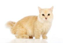 Chat de petite taille