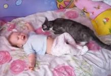 Incroyable réaction d'un chat lorsqu'un bébé pleure