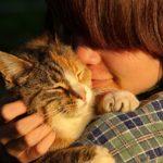 Adopter un chat dans un refuge