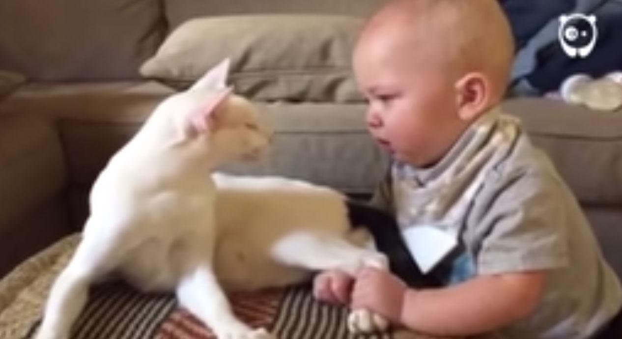 Incroyable réaction de ce chat face à un bébé