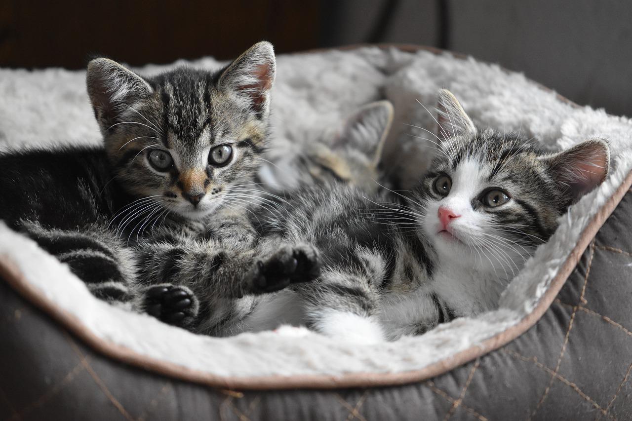 accessoire pour chat ou dormir