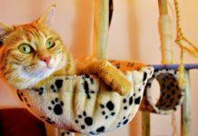accessoire indispensable pour chat
