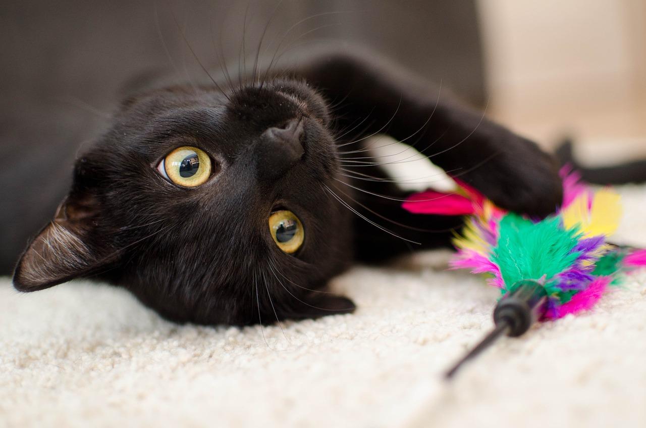 jouet accessoire pour chat