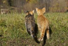 savoir si 2 chats s'aiment