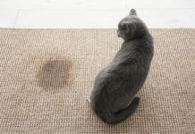 Enlever l'odeur d'urine d'un chat
