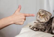 chat fait pipi sur mon lit