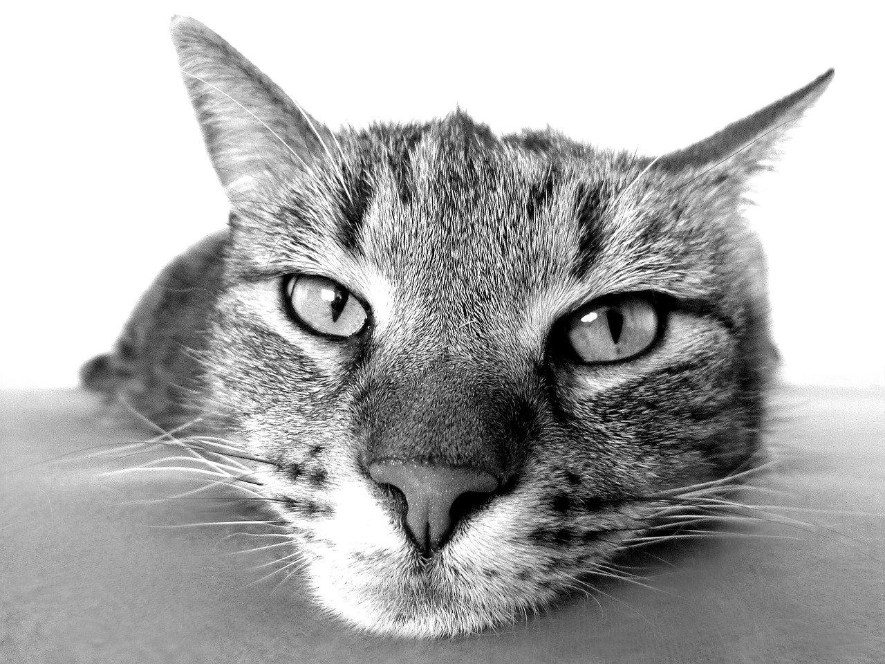 les chats de plus en plus prisés par les Français