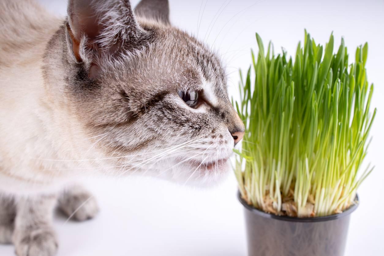 pourquoi chat purger régulièrement