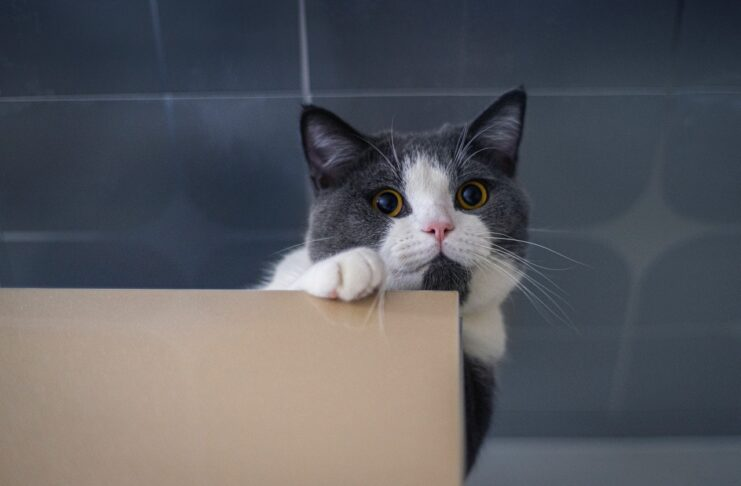 Adopter un chat en chatterie