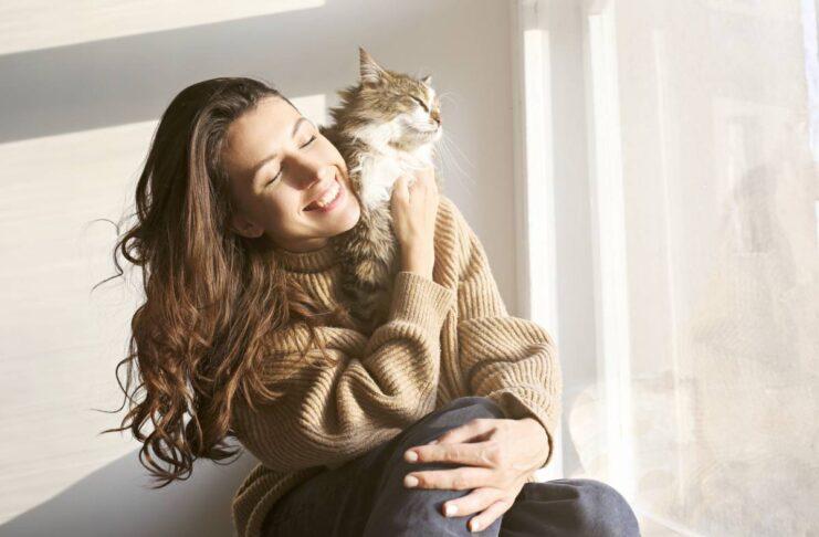 races de chats les plus appréciées des Français