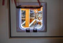 critères à regarder chatière
