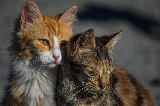 conseils adopter un deuxième chat