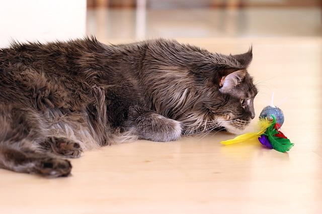 jouer avec son chat