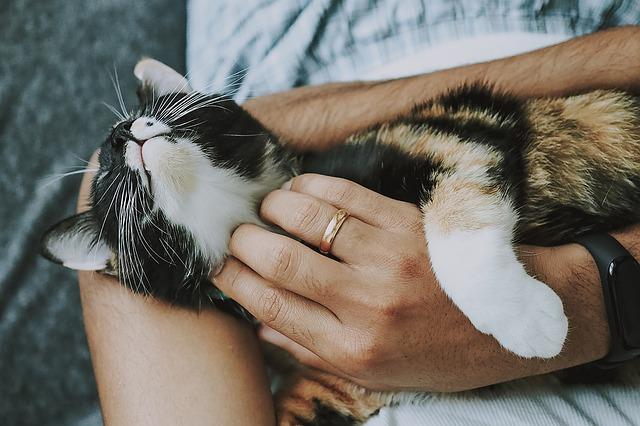votre chat a confiance en vous