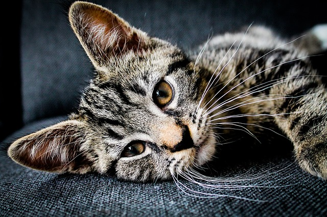 savoir si votre chat déprime