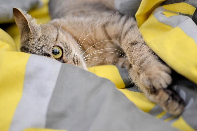 chat vous mord quand vous le caressez
