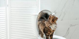 chat utiliser les toilettes