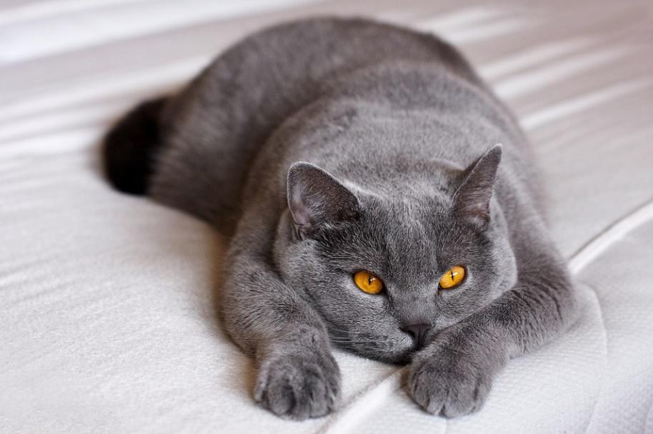 combien temps laisser seul chat maison
