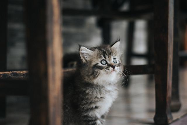 conseils pour adopter un chaton