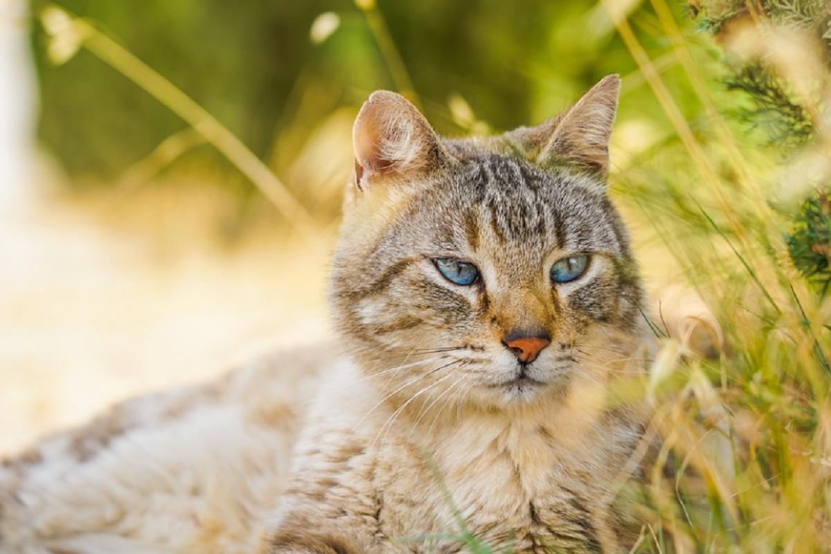 dangers cachés de l'automne pour votre chat