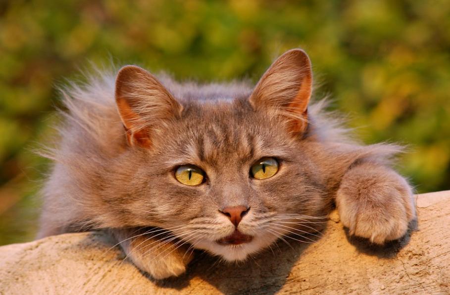 dangers automne chat