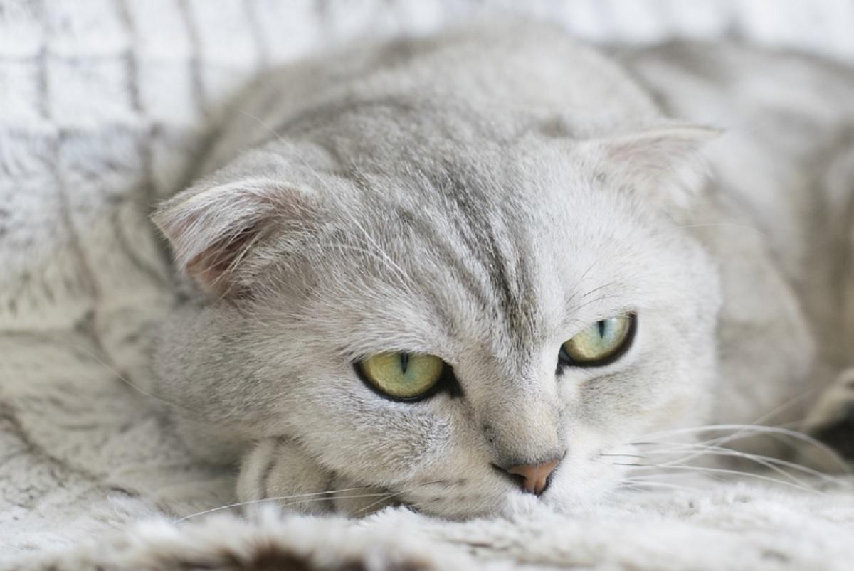 ne devez pas engueuler votre chat