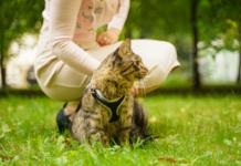 habituer un chat à la promenade