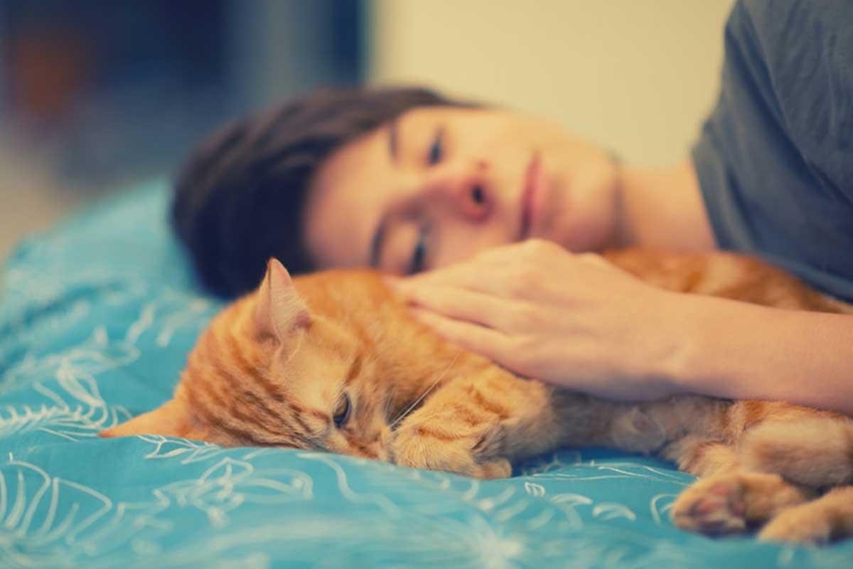 ne pas dormir avec votre chat