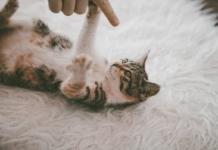 ne pas engueuler son chat
