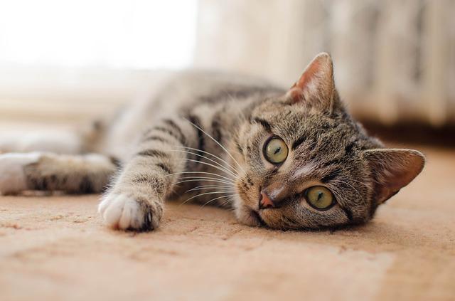 pourquoi chat n'est pas propre