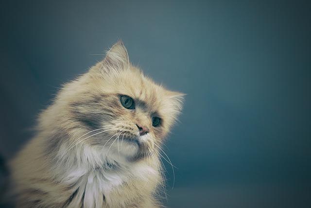 comment savoir si votre chat déprime