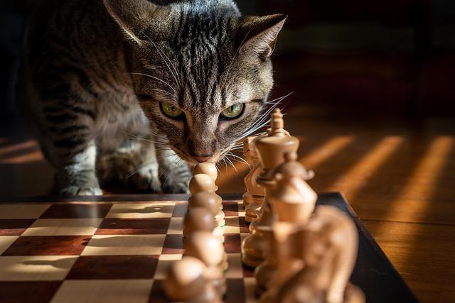 savoir si chat intelligent