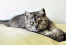 savoir si votre chat vous reconnaît