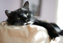 signes que votre chat est malade