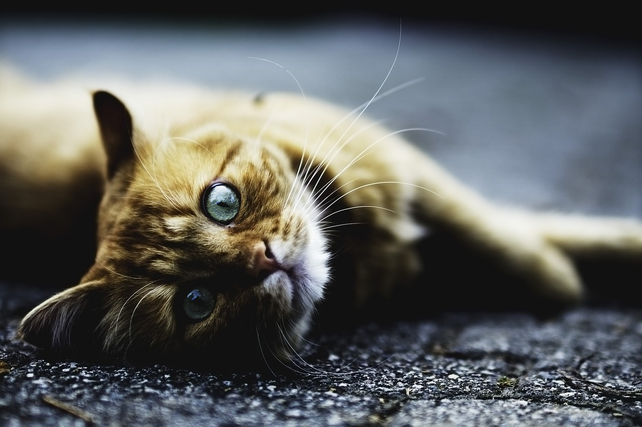 symptômes que votre chat est malade