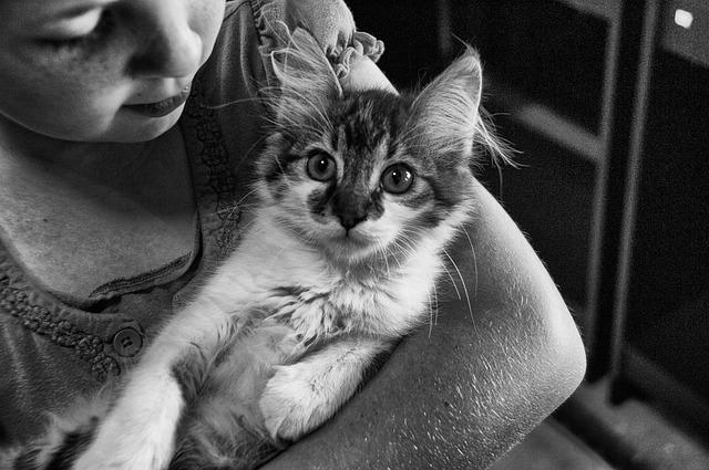 votre chat aime-t-il vraiment les bisous