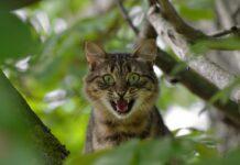 chat est énervé