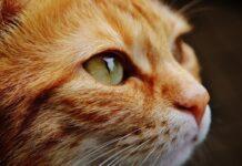chats tués car ils étaient porteurs du COVID