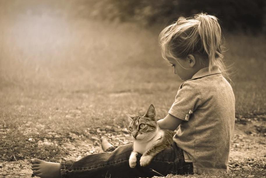 races de chat entende mieux avec enfants