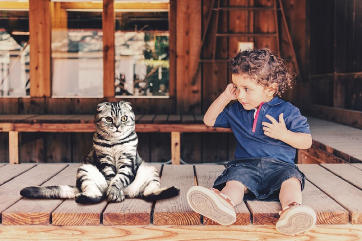 races de chat qui s'entendent le mieux avec les enfants