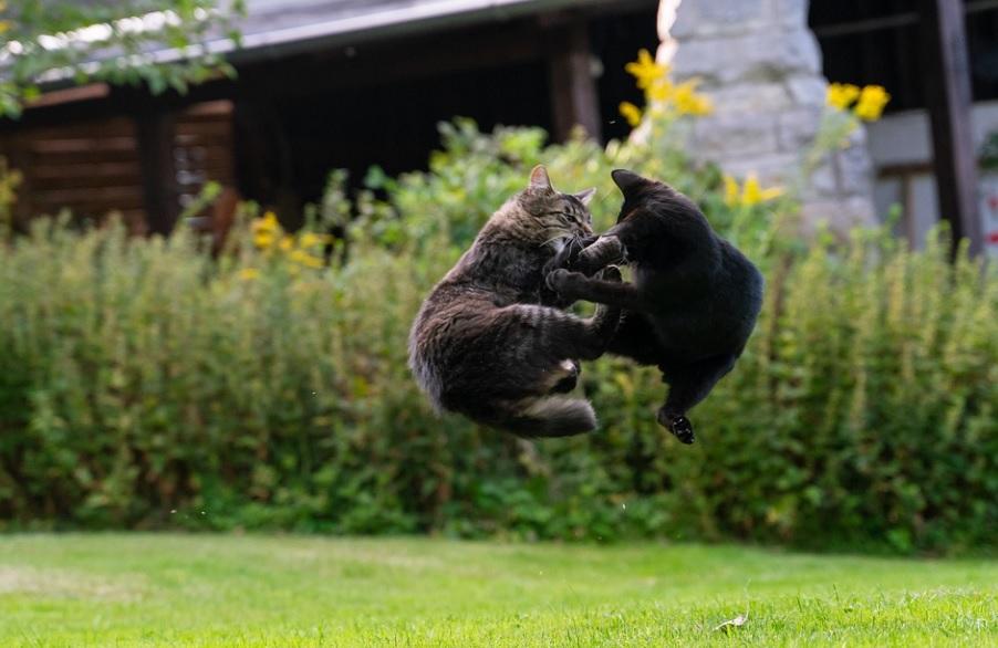 arrêter une bagarre entre deux chats