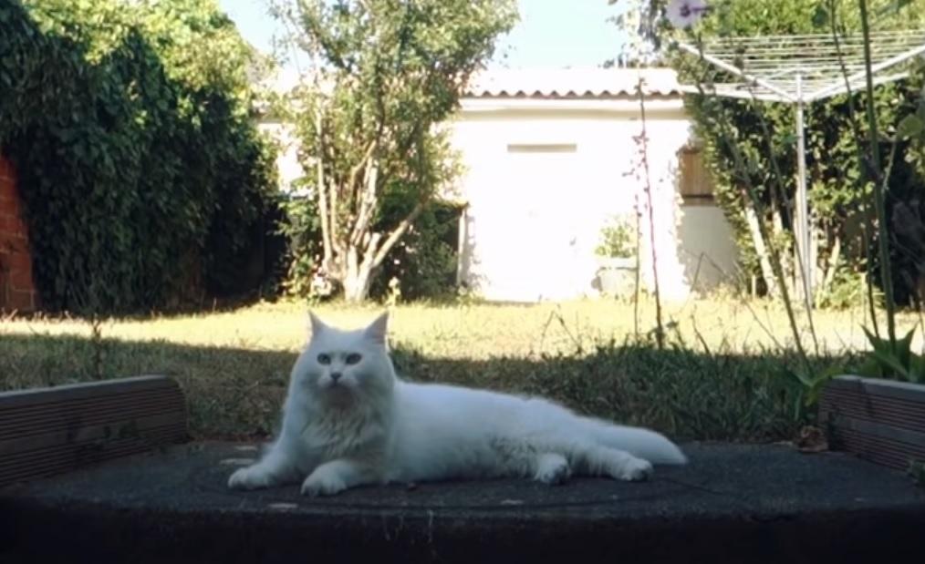 vidéo chat qui danse